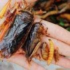 *** Как правильно есть насекомых в Таиланде ***