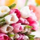 Милые дамы Поздравляем вас с 8 марта!