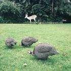 Отпуск на острове Пхукет