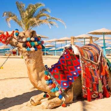 Египет, Шарм Эль Шейх